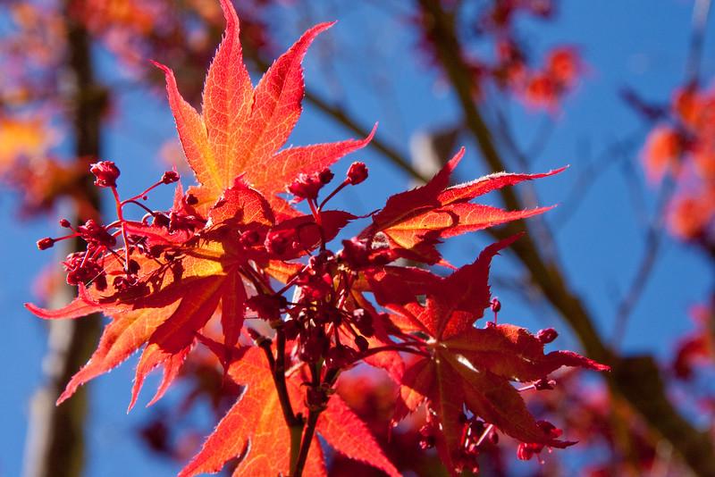 Hakone_Gardens-20.jpg