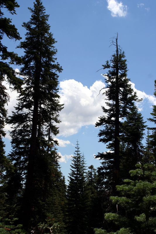 clouds and trees.jpg
