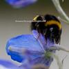 nederland 2010, buitenpost, bijen