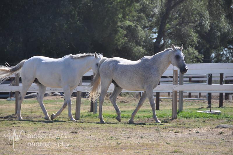 EB&Horses-135.jpg