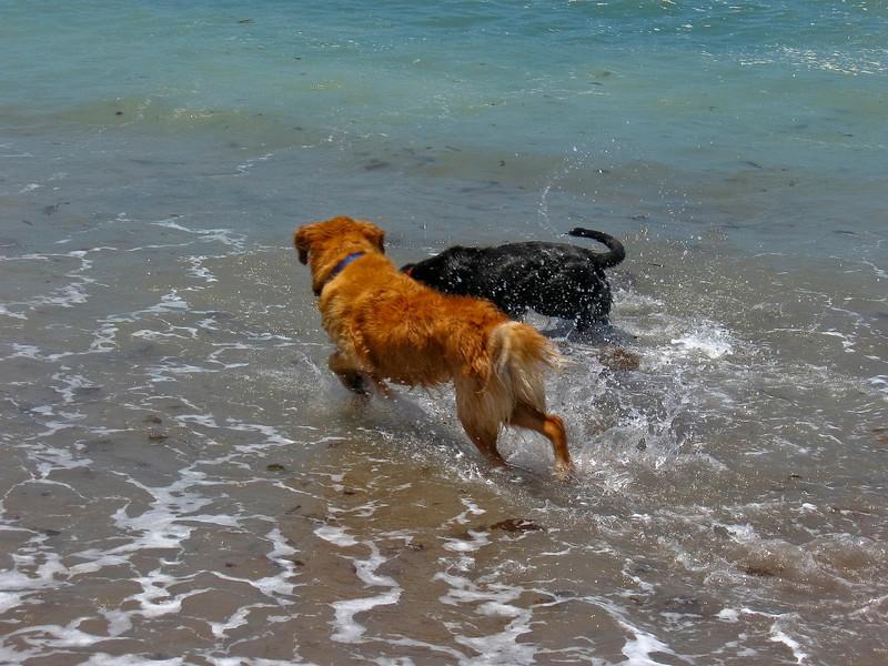 dogs-30.jpg
