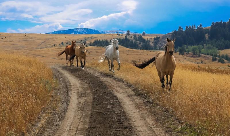 Horses 19.jpg