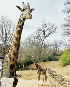 EJ Zoo