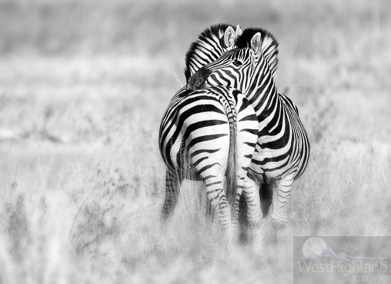 Botswana-20110715-2451-Edit-2-Edit-Edit.jpg