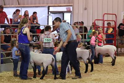 2016 Sheep Show