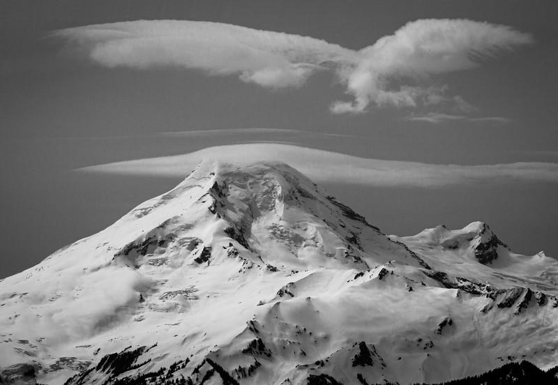 Eagle over Mt Baker