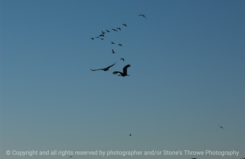 birds-bosque_del_apache_nm-01dec06-3136