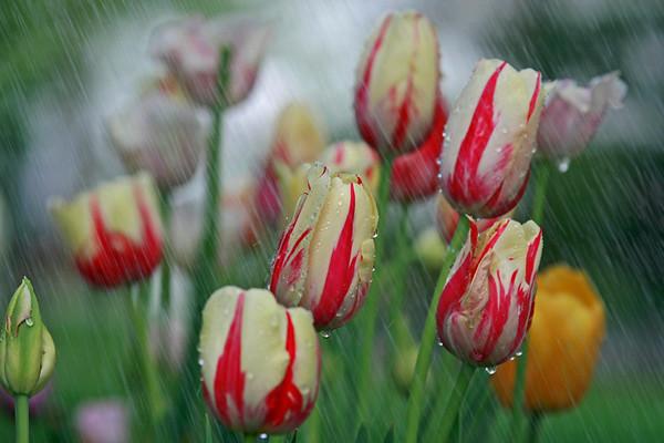 Miss Margaret's Flowers and Garden