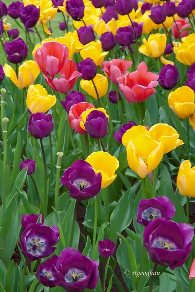 April 15_Tu;ip Garden_0899.jpg