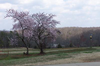 Spring at ACatdaddy's