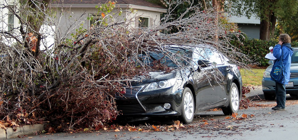 . Toni Chauncy makes a call after discovering a large tree had fallen on her vehicle in her front yard on Friday, Dec. 12, 2014 in Bakersfield, Calif.  Rain fell at the rate of 1 to 2 inches an hour, triggering flash flooding, the National Weather Service said. The main front followed with rain falling at rates of a tenth to about a third of an inch per hour.(AP photo/The Bakersfield Californian, Casey Christie)