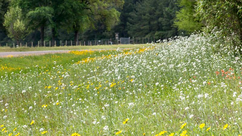 Texas Spring-0609.jpg