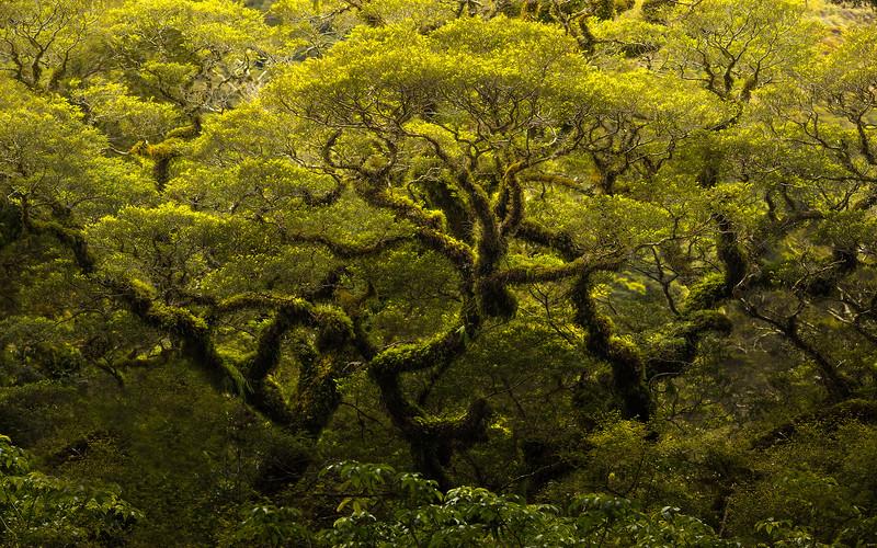 NZTrees.jpg