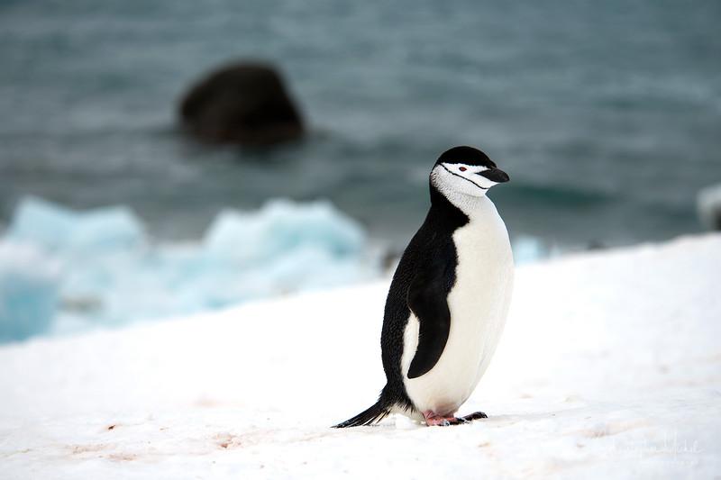 091204_penguin_island_8236.jpg