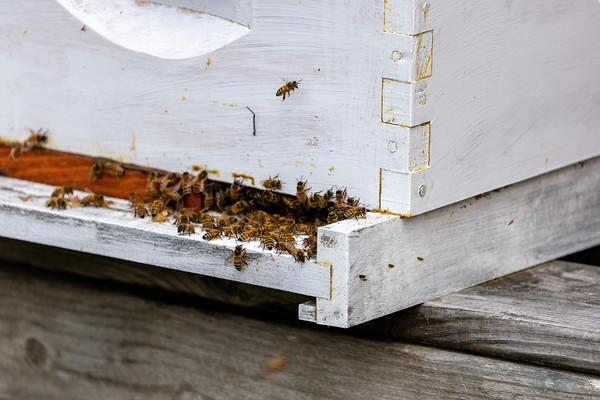 Lorton Hives