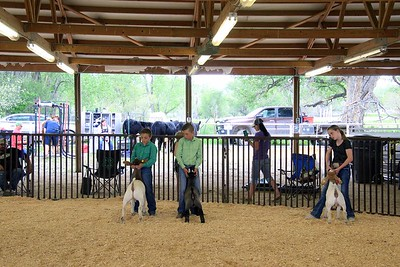 Junior Goat Showmanship