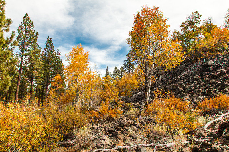 The autumn colors contrasted nicely with the volcanic rock