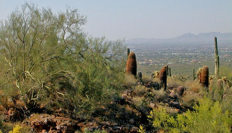 palo verde hillside.jpg