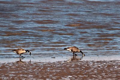 Birds of Mason Neck Park - Feb 2010