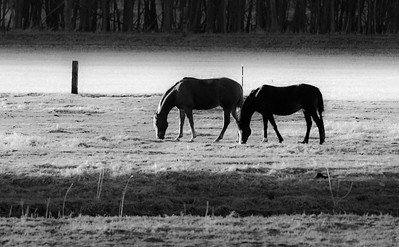 04-30-2018-horses