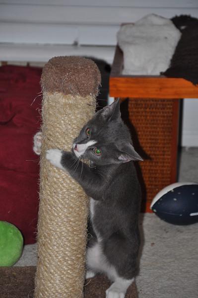 Kittens Sept