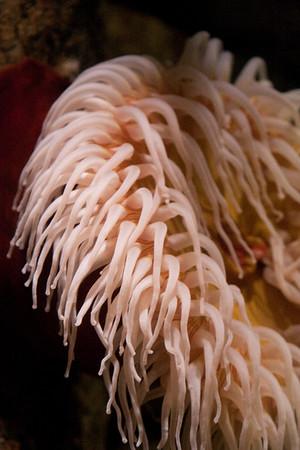 Monterey Bay Aquarium 2010