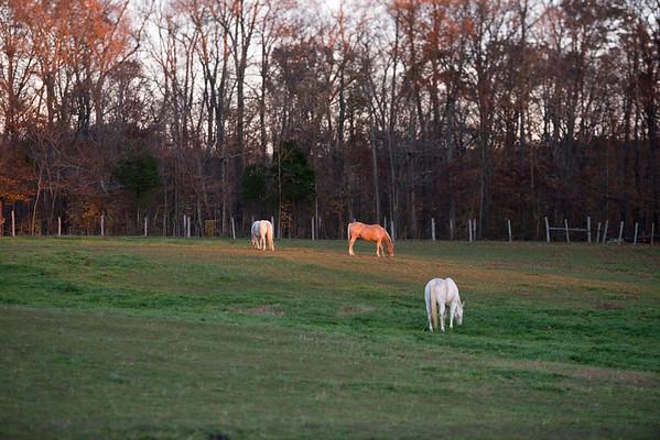 Horse Farm Indiana
