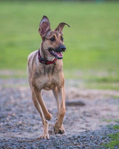 Medford Dog Park 5.2.2014-3905.jpg