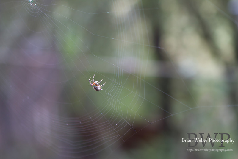 This (not-so-little) spider was busy spinning a web.  A web that encompassed the entire window, incidentally.