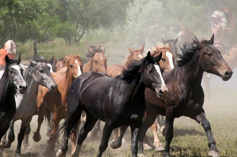running horsewithindiansBattleLittleBig Horn2010DSC_1659.jpg
