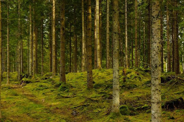 Skog Bexet