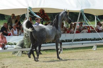 Stallions 4-6 yrs