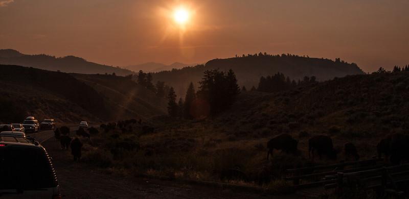 Yellowstone-8849.jpg
