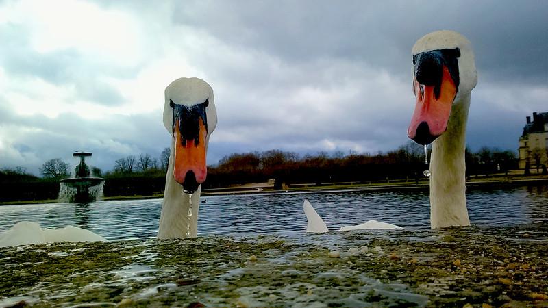 Fontainebleau-Swans150333158.jpg