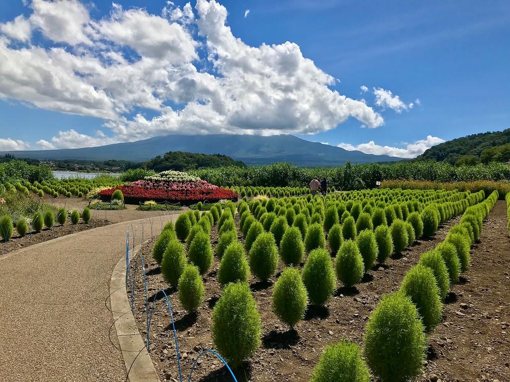 The gardens at the Kawaguchiko Natural Living Center.