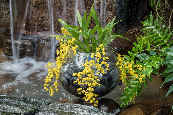 Orchid Extravaganza