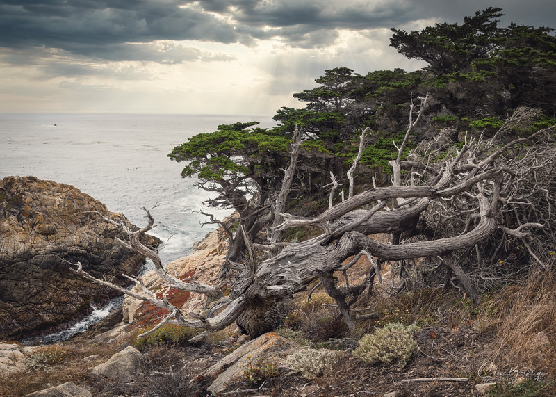 Cypress Grove at Point Lobos