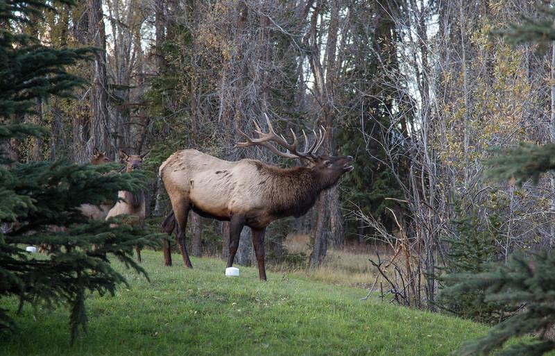 Elk (1 of 1)-8.jpg