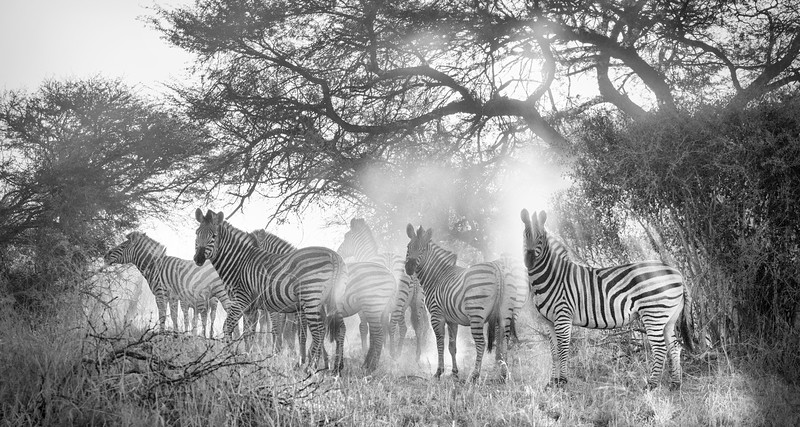 Africa in Black and White