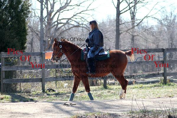 Livingston Manor Arabians Collection