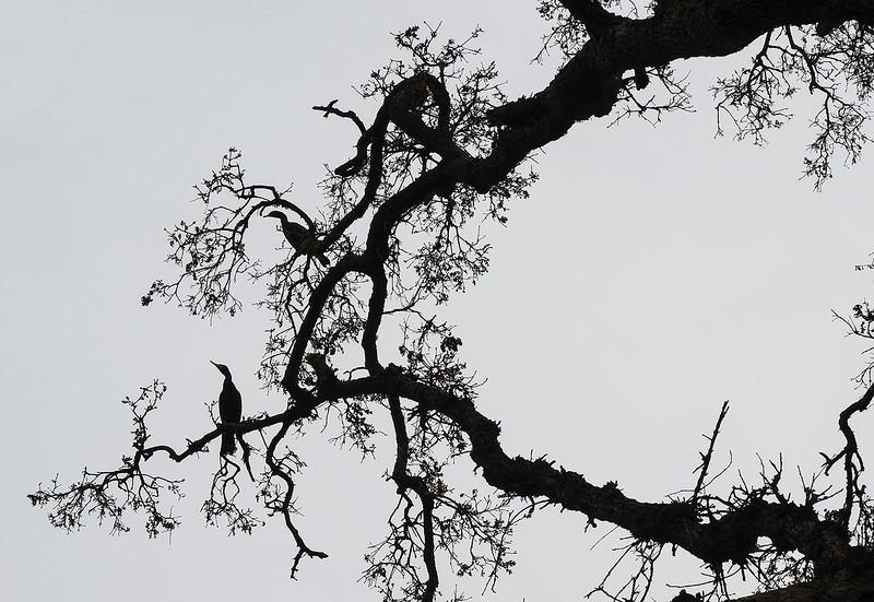 bird branches.jpg