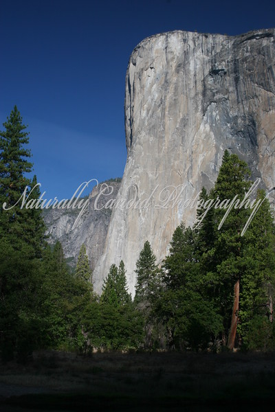 El Capitan, the world's largest known piece of solid granite rock.   Yosemite National Park, CA.