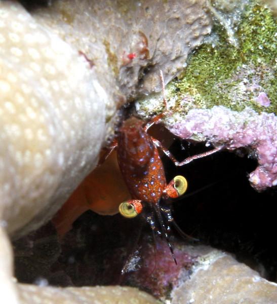 shrimp_13.jpg