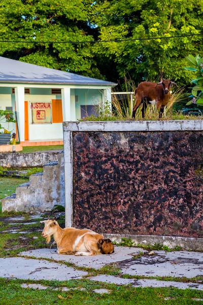 Timor Leste-220.jpg