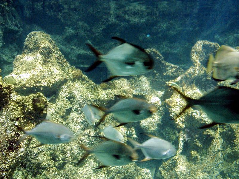 51.  Sydney Aquarium.JPG