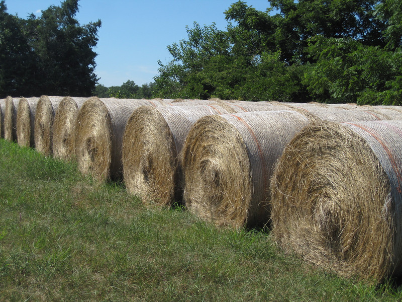 I needed twice as many rolls of hay to make this impressive.