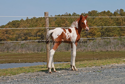 Freckle's Filly