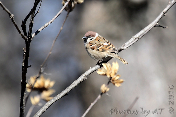 2010-02-26 Local Birds