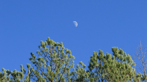 Moon Daytime Pines 20071217