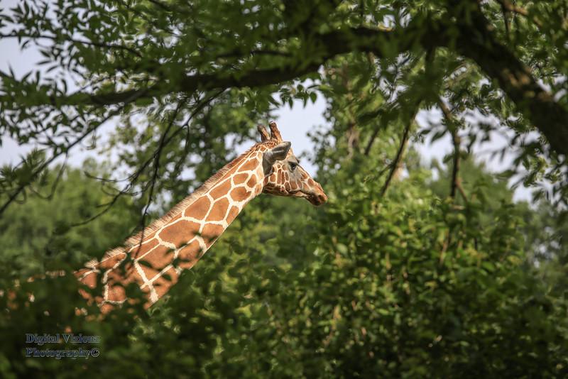 2016-07-17 Fort Wayne Zoo 218LR.jpg